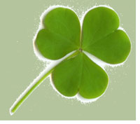 Shamrocks have three leaves, not four.